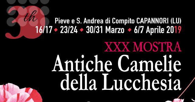 30 anni della mostra Antiche Camelie della Lucchesia. 4 fine settimana a tema dedicati alla botanica, al tè, al cibo e alla musica