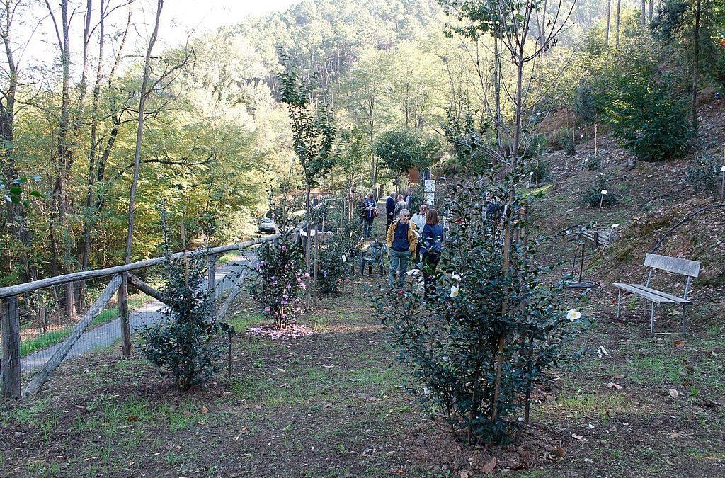 Sabato 19 ottobre nel Compitese l'iniziativa 'Frantoi aperti'
